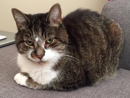 Shauna's cat Tiger