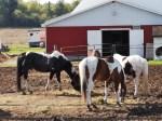 horses may 2019a