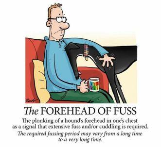 hound forehead