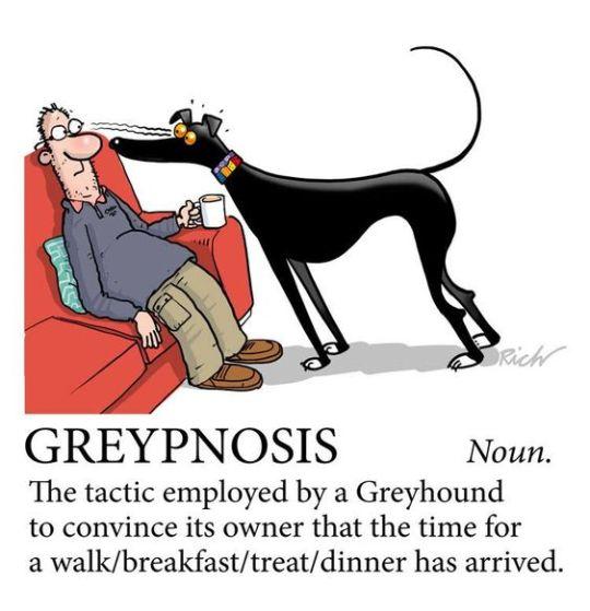 hound persuasion
